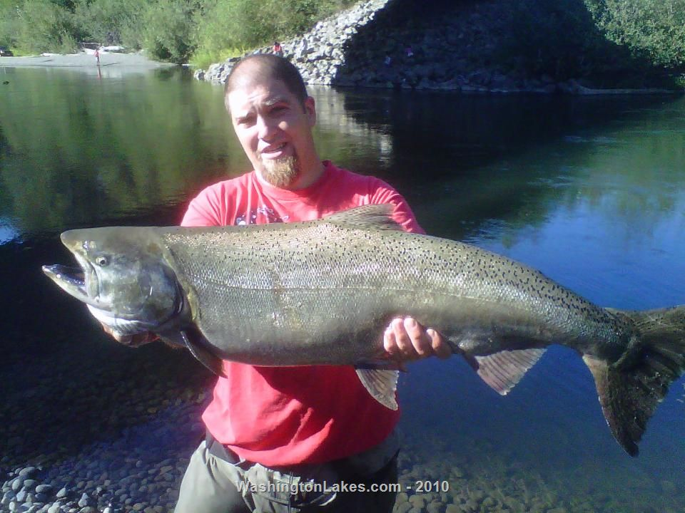 nisqually river fishing report northwest fishing reports