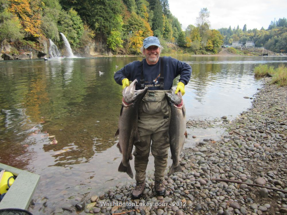 lewis river fishing report northwest fishing reports