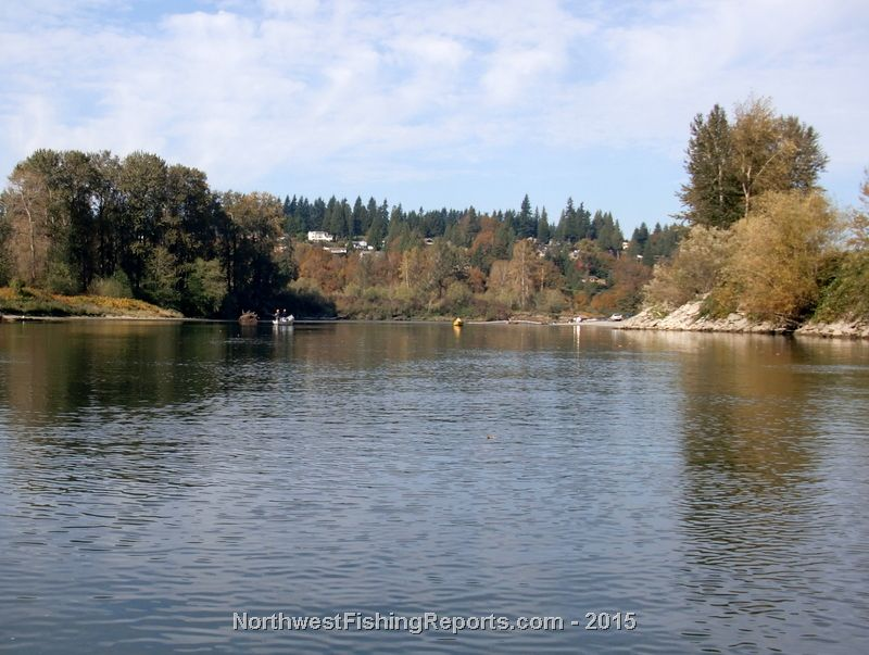 Snohomish river photo gallery northwest fishing reports for Snohomish river fishing