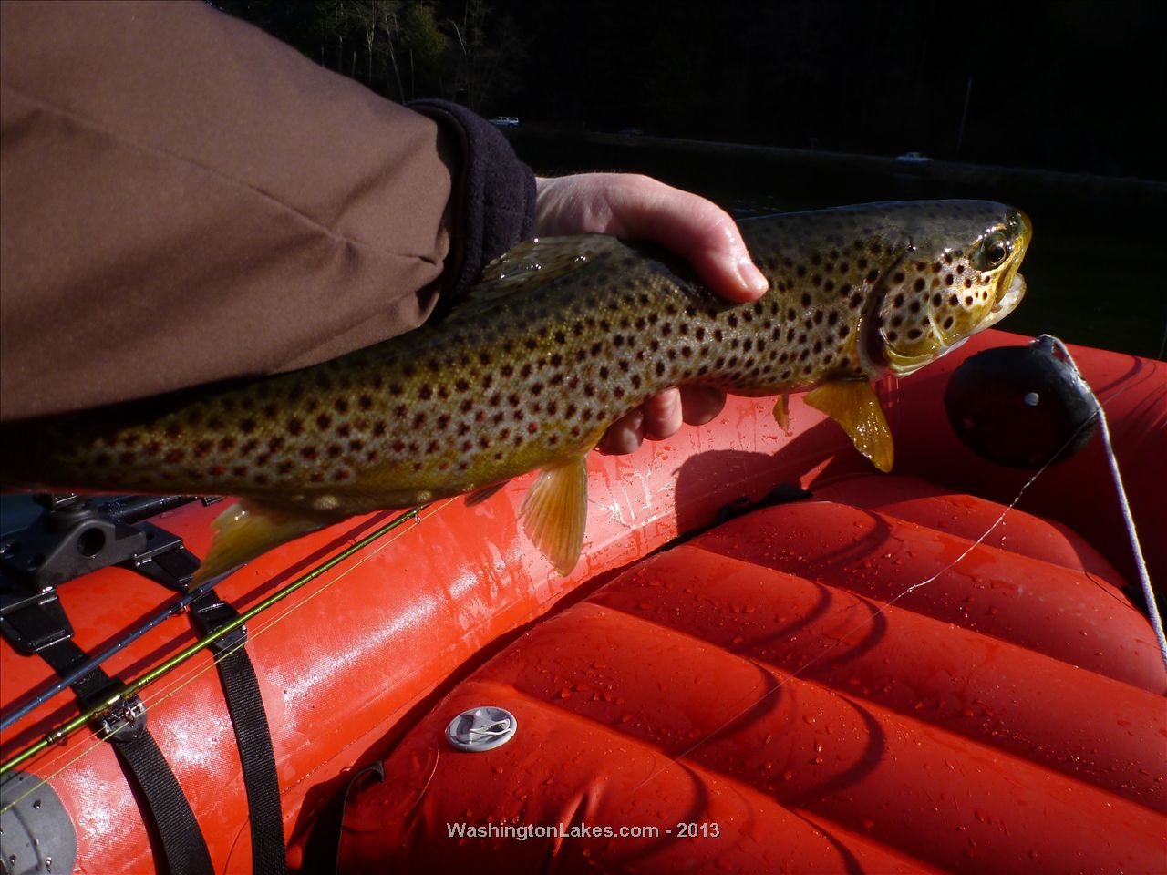 Pass fishing report northwest fishing reports for Wdfw fishing emergency rules