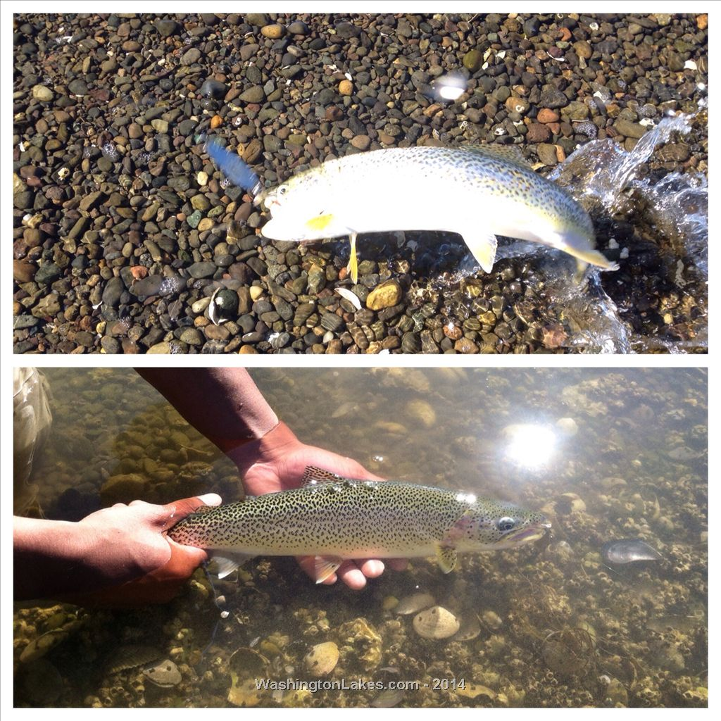 Area 12 hood canal photo gallery northwest fishing reports for Wdfw fishing emergency rules
