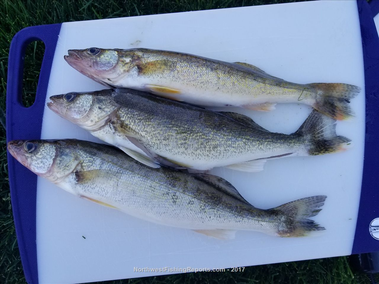 Scootney fishing report northwest fishing reports for Wdfw fishing emergency rules