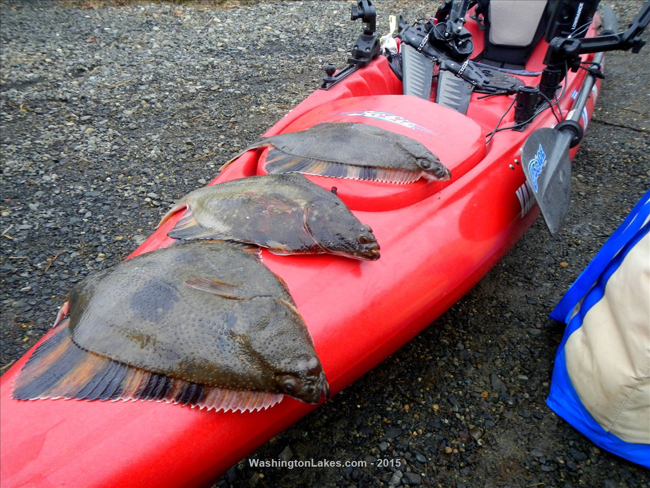 Area 13 south puget sound fishing report northwest for Nisqually river fishing report