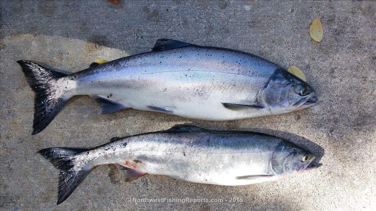 Area 8-1 Deception Pass Fishing Report - Northwest Fishing Reports