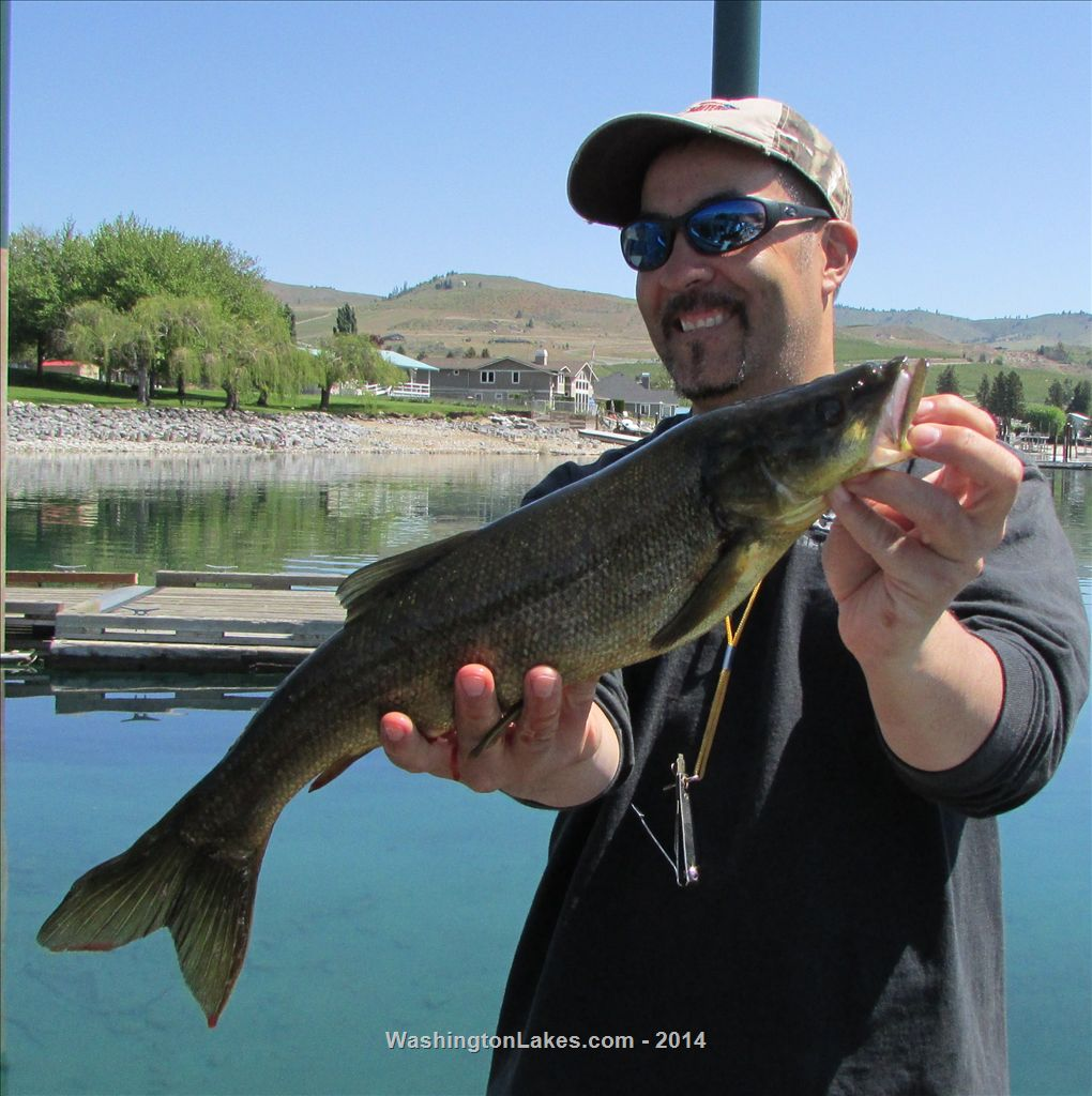 chelan fishing report northwest fishing reports