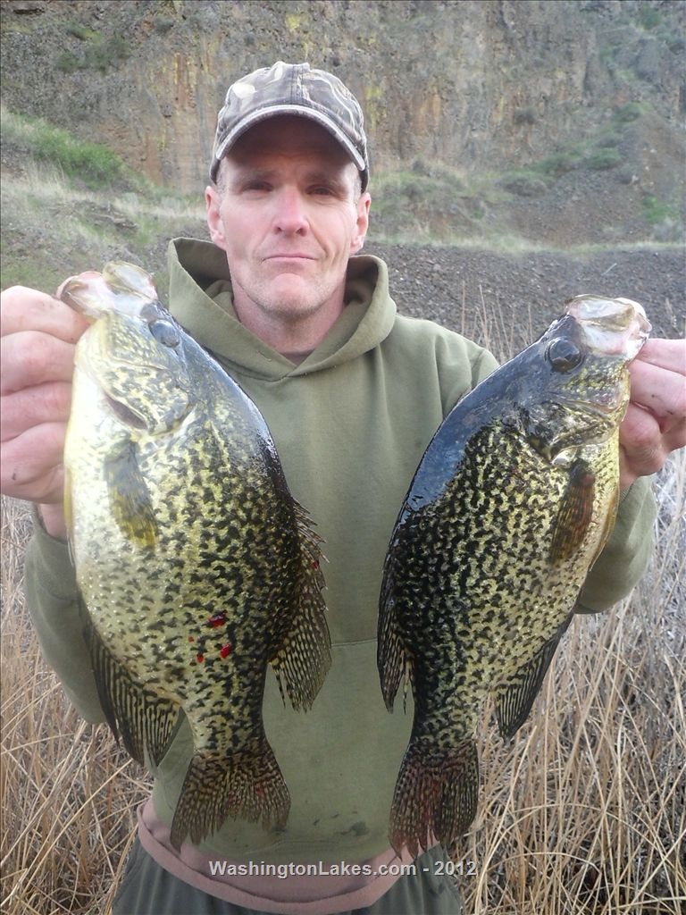Banks fishing report northwest fishing reports for How to fish for crappie from the bank