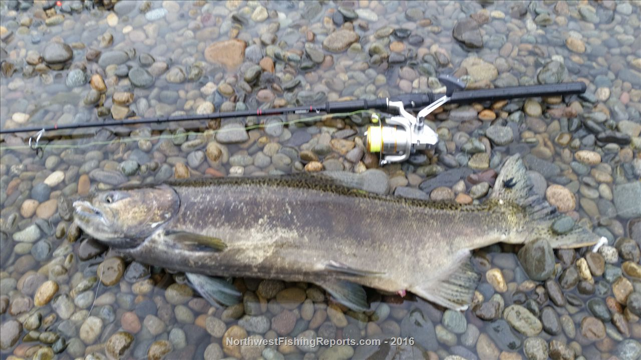 Cowlitz river fishing report northwest fishing reports for Nw fishing report