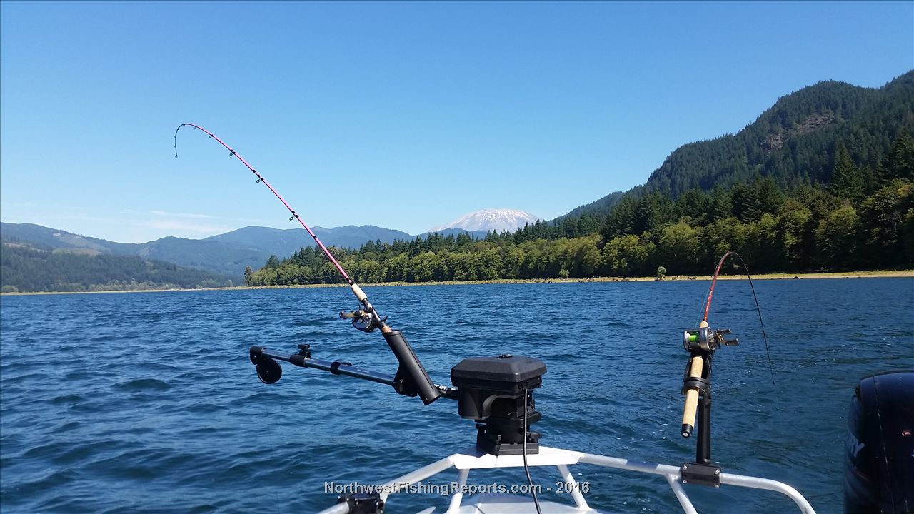 Yale fishing report northwest fishing reports for Nw fishing report